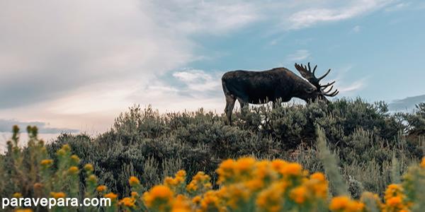 Dünya Doğayı Koruma Vakfı (World Wide Fund for Nature ya da kısaca WWF), doğanın zarar görmesini durdurmayı ve verilen zararları onarmayı amaçlayan uluslararası bir sivil toplum kuruluşudur.